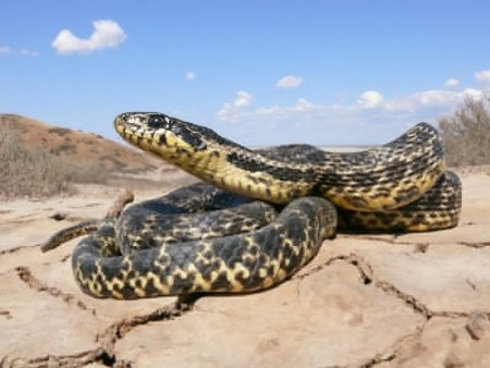 ядовитые змеи ставропольского края фото и описание