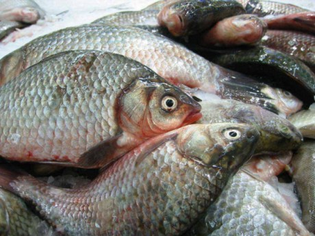 Когда рыба без воды...